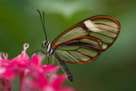 10 Tips for Great Butterfly Photos