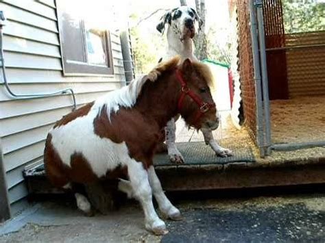 Are we finished? - Great Dane & Miniature Horse - YouTube
