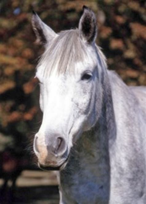 What abnormal hair growth might mean - The Horse Owner's