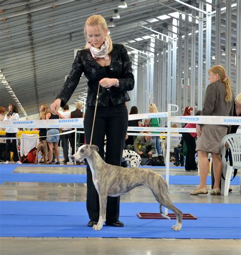 News :: Kennel Fast Dunderry