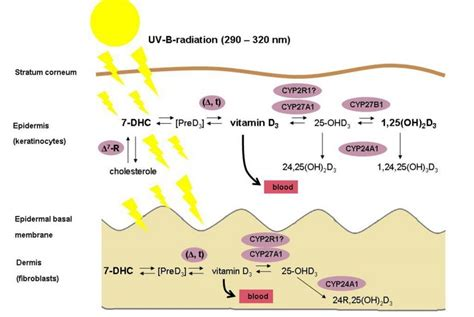Genome-wide view on the physiology of vitamin D – ebook